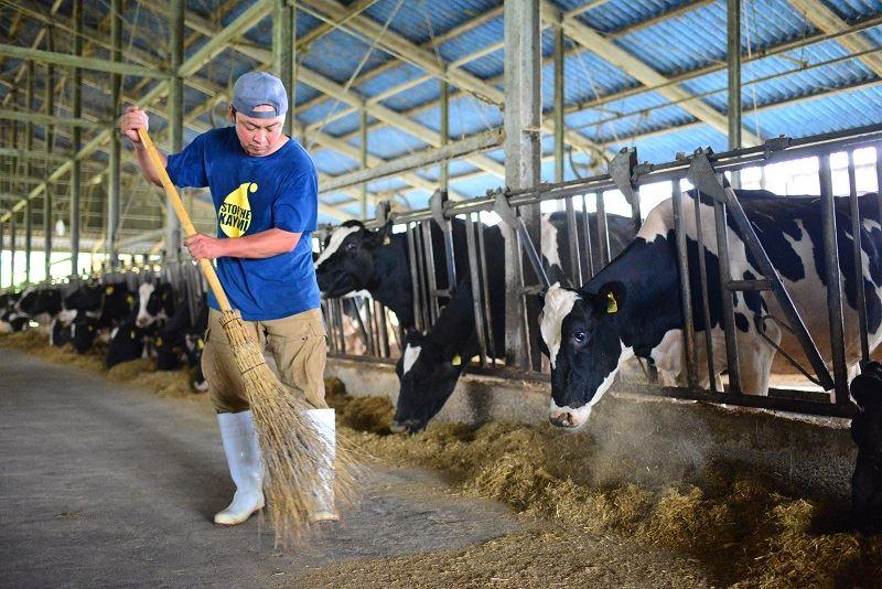 牛舎を掃除する正幸さん