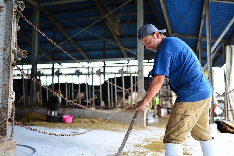 牛舎で掃除をする正幸さん