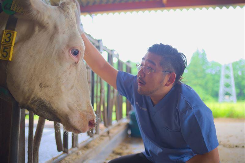 牛と向き合う原田先生
