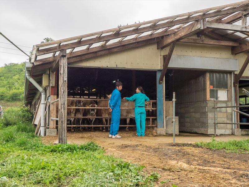 ファームつばさの牛舎