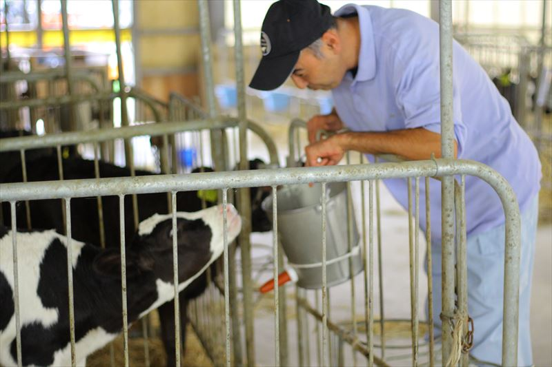 フェリスラテ田中さんと牛たち