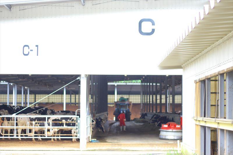 フェリスラテの搾乳牛舎