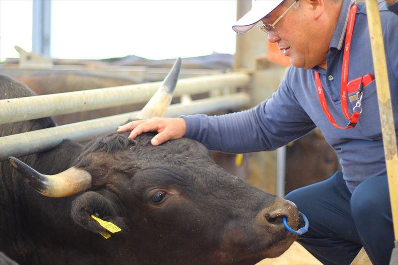 牛をなでる湯浅ファーム・治さん