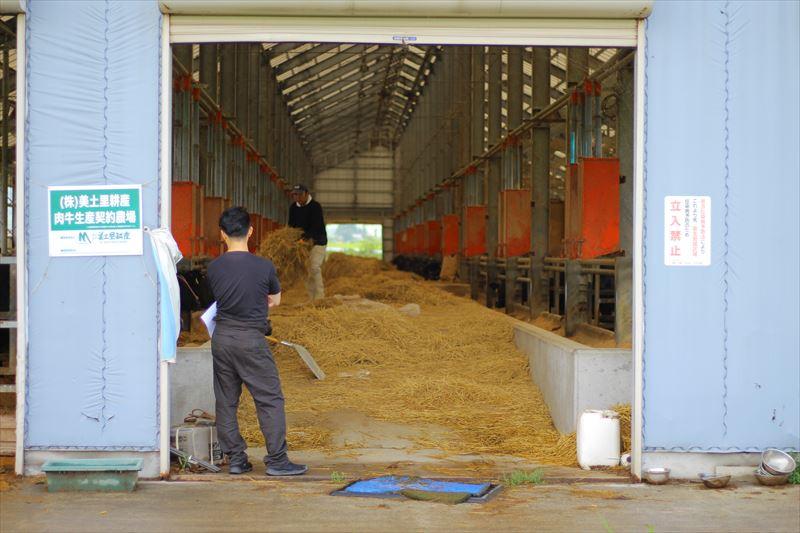 湯浅ファームの牛舎の様子