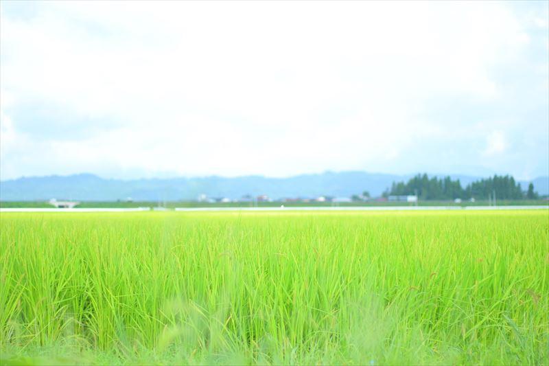 どこまでも広がる田園風景