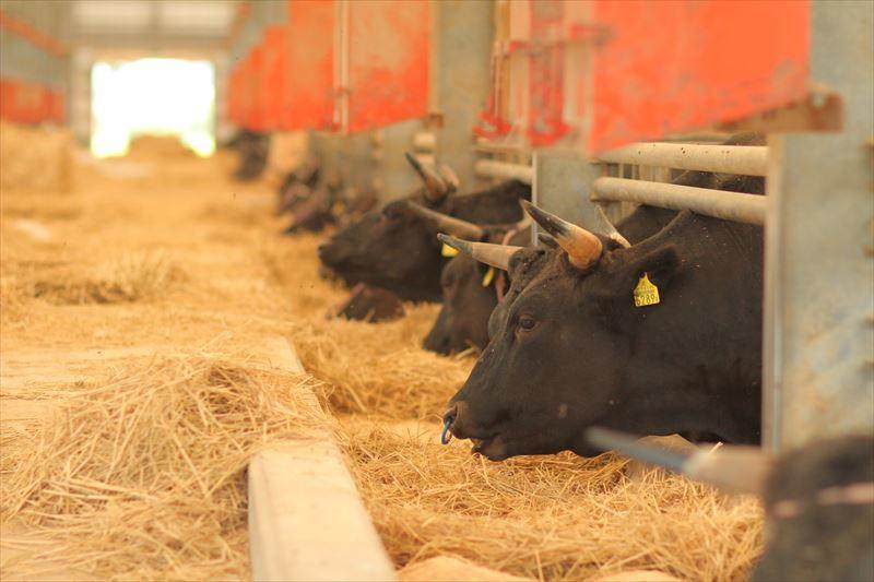 湯浅ファームの牛舎