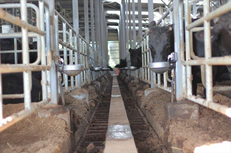 うしちゃんファーム牛舎