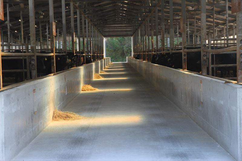 うしちゃんファームの牛舎