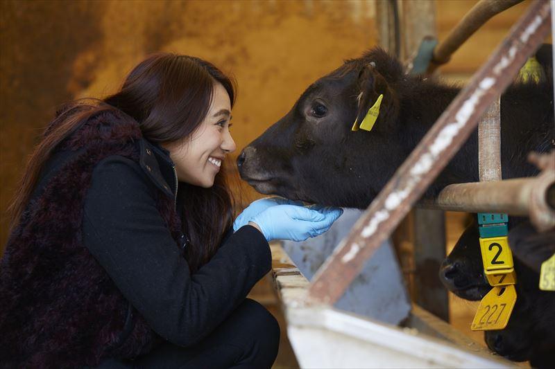 ガルちゃんと牛