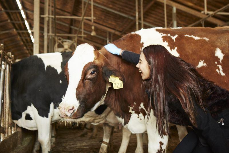 牛と触れ合うガルちゃん
