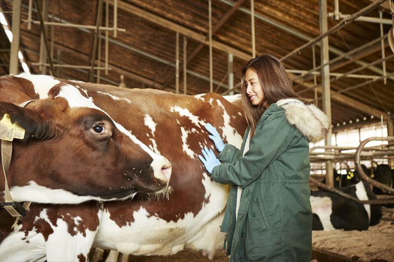 牛に触れる島野ミキさん