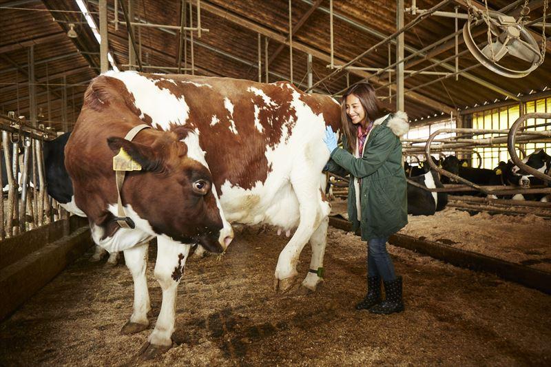 牛と戯れる島野ミキさん