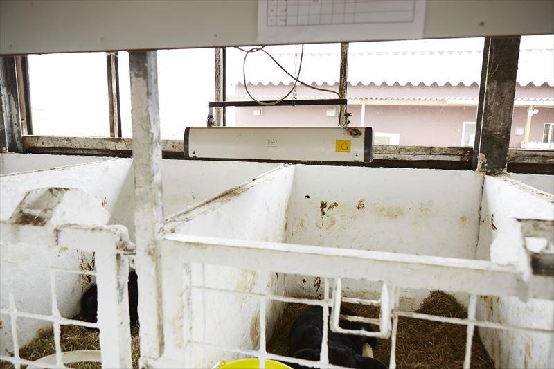 子牛用のヒーター