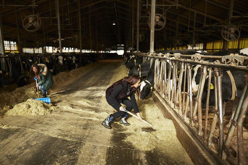 牛舎の掃除をする島野ミキさんとガルちゃん