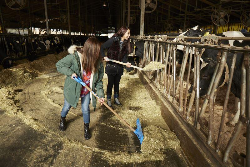 牛の餌やりをする島野ミキさんとガルちゃん
