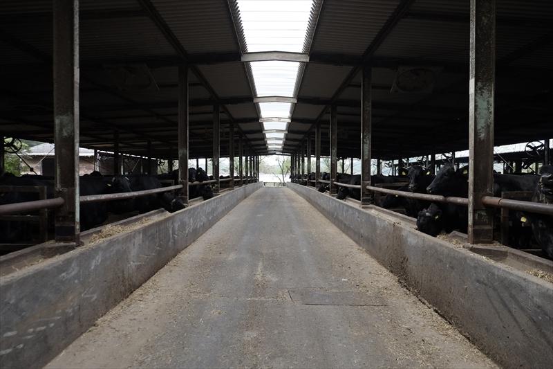 すすき牧場牛舎