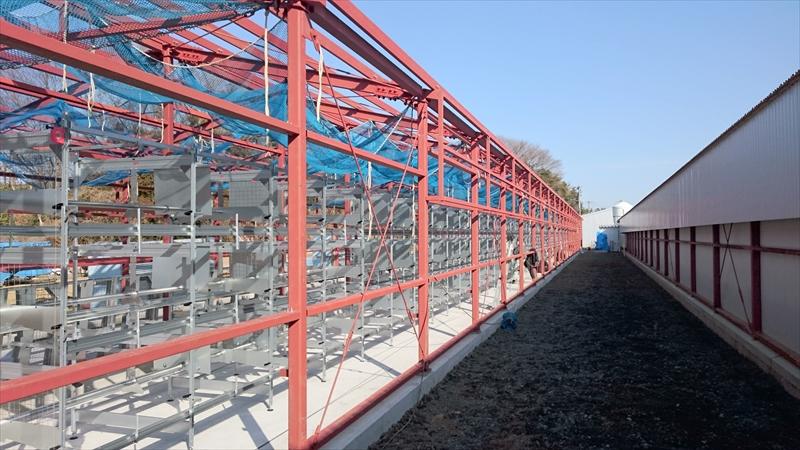 震災後、新しく養鶏場を建築