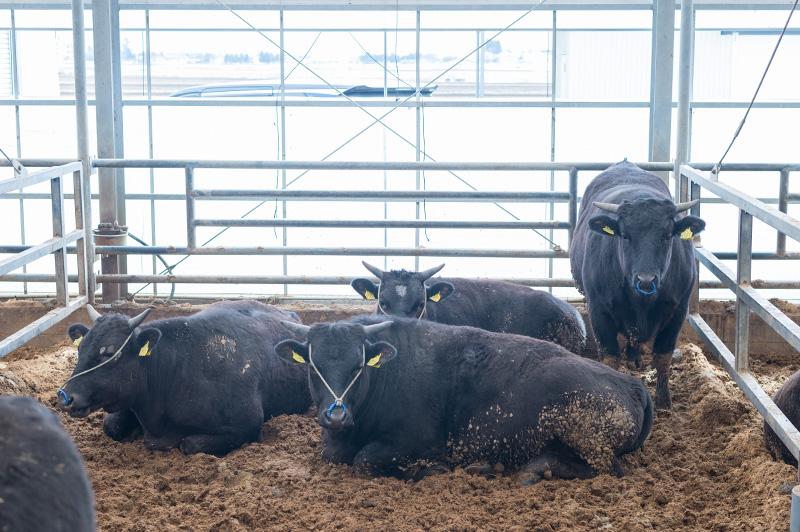 湯浅ファームの牛たち