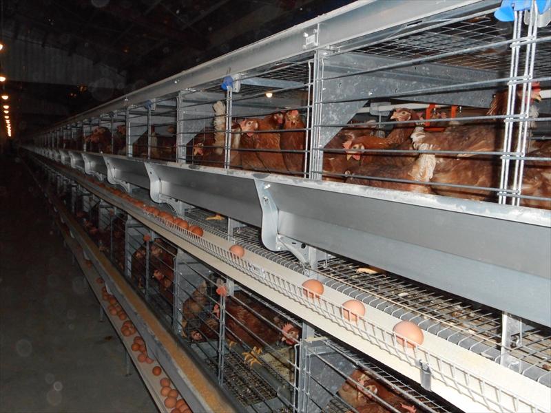 有限会社オオガキ養鶏場