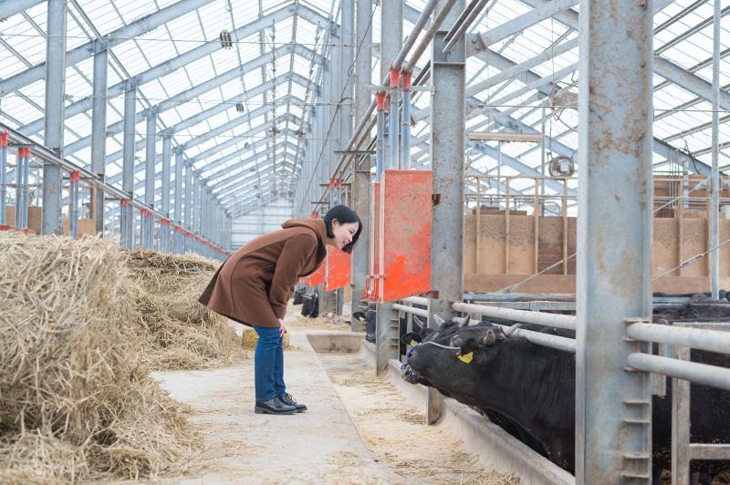 湯浅ファームの牛舎と社領エミさん