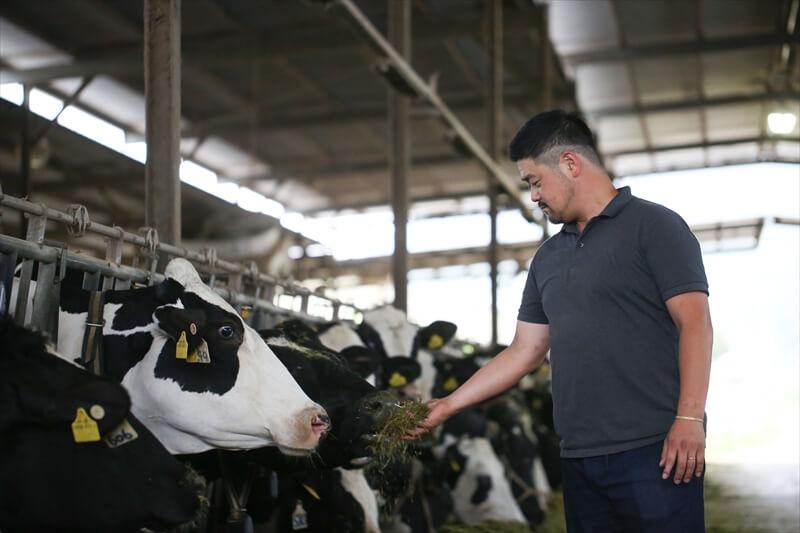 箸荷牧場の今中さんと牛