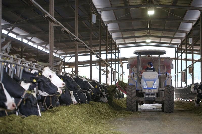 箸荷牧場の牛舎の様子