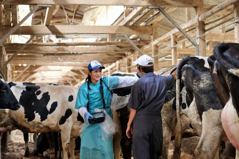 牛の診察をする瀧口朝陽先生