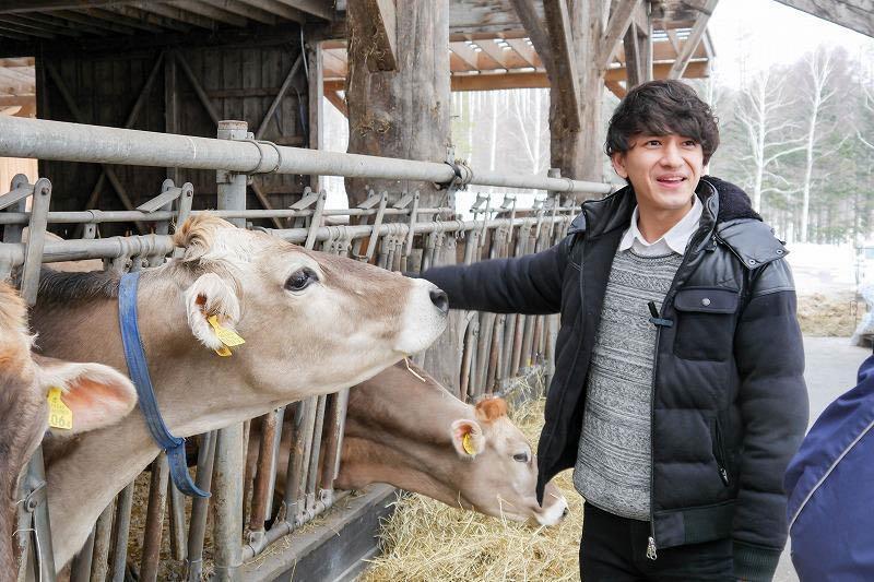 共働学舎新得農場のブラウンスイス