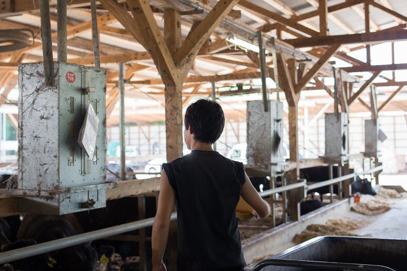 福永畜産の牛舎