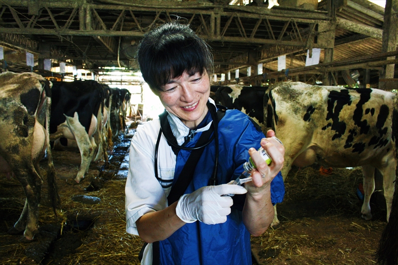 牛の診察をする中山先生