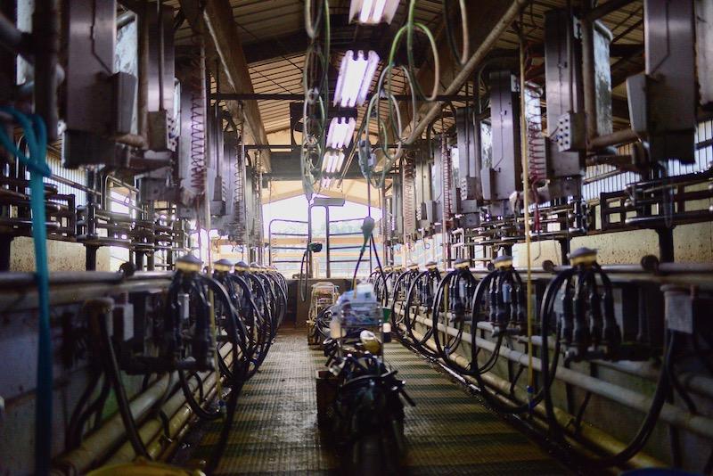 保田牧場の牛舎