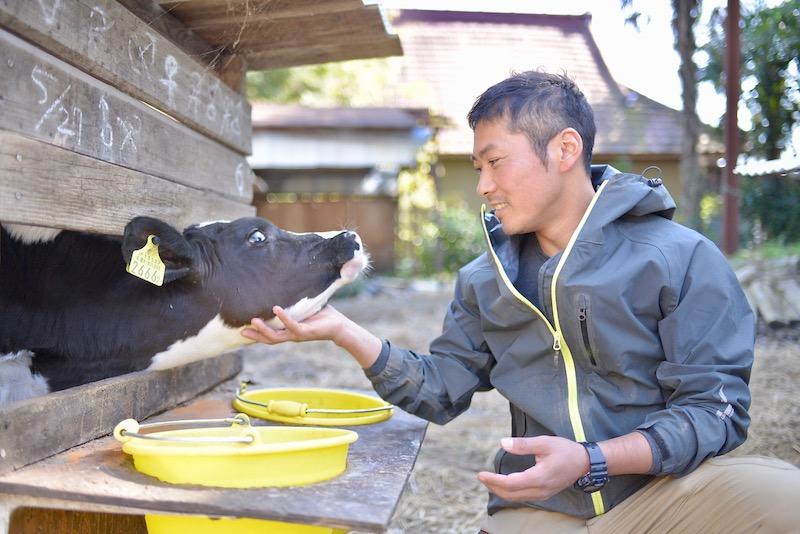 木名瀬牧場の牛